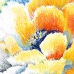 Hahnemühle Pastell/Kohle